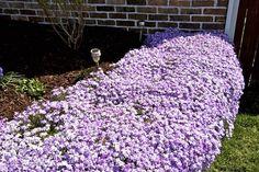 talus de jardinière recouvert de fleurs couvre sol tapissantes