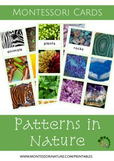 patterns in nature Montessori Nature printables - learning to identify patterns in natural environment - educational printables  and activities for Montessori classroom and home