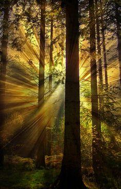 Sunlight through ancient woods. Love it!! Tumblr