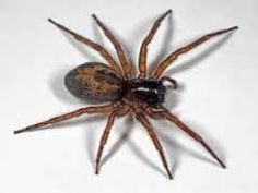 Om kleine spinnetjes uit m'n masker te laten komen laten komen lijkt mij ook leuk. Als teken dat het erg verrot is.