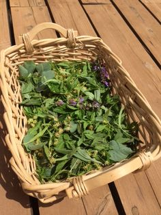 Drying two kinds of mint, lemon balm, sage and flowers from the lime tree to prepare my own tea collection for the cold winter months