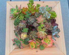 Terravert  Vertical Earth Garden PICTURE PLANTER living succulent wall DIY kit  tabletop planter  spring