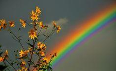 Bb7711 Fondos en color Página 2: flor del arco iris del cielo flores coloridas