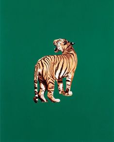 """Draw Tigers """"Tiger,"""" 1985 by Sarah Charlesworth. -Wmag - The late artist and BOMB co-founder Sarah Charlesworth is experiencing something of a revival. See highlights from her new show here. Art Photography, Art Inspo, Drawings, Painting, Illustration Art, Art, Pictures, Collage Art, Prints"""