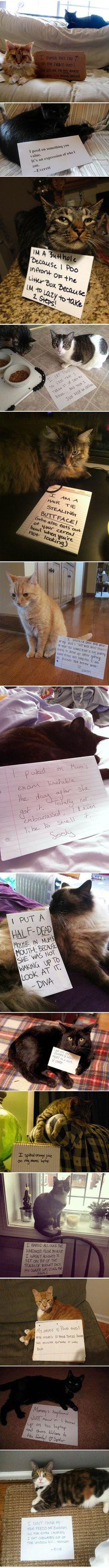 Cat punishment lol!