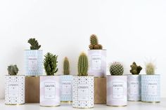 AŸ Cactus - Urban Jungle