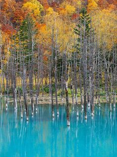 The Blue Pond in Hokkaido, Japan changes colors depending on the weather - photographed by Ken Shiraishi