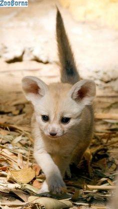 Já viu filhotinhos de raposa? Eles são muito fofos! - Foto 5 - Bichos - R7