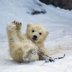 Baby polar bears are almost as cute as baby pandas, ALMOST. Cute Baby Animals, Animals And Pets, Funny Animals, Wild Animals, Funny Dogs, Jungle Animals, Baby Polar Bears, Polar Cub, Tier Fotos