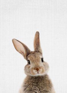 Woodland Bunny Rabbit by Lila & Lola Art Print Lapin Art, Baby Animals, Cute Animals, Rabbit Colors, Wall Art Prints, Canvas Prints, Canvas Canvas, Rabbit Art, Bunny Art