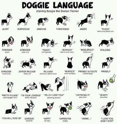 "Here's a little doggie language ""cheat sheet""."