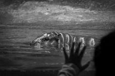Little hippo by Dmitri Yakovlev on 500px