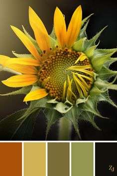 ZJ Colour Palette 503 #colourpalette #colourinspiration