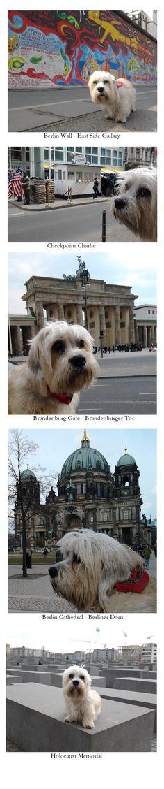Ziggy in Berlin
