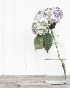 hydrangea... tinted deep purple with a touch of green - Kim Klassen {dot} Com - in friday finds