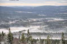 Syötteen vaarat ja suot - syöte syötteen kansallispuisto suo rinnesuo vaara vaaramaisema maisema ensilumi lumi talvi talven tulo marraskuu metsä havumetsä kuusi mänty iso-syöte tunturi suo metsä kuusi kuusimetsä