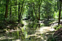 Der Oberstjägermeisterbach Bavaria, Munich, Waterfall, Germany, Green, Outdoor, Pictures, Beautiful Life, Helpful Tips