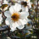 World Love Flower