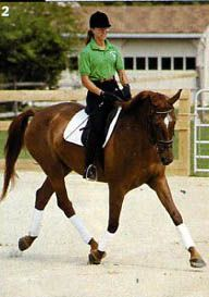 70 Best Dressage images in 2012 | Dressage, Horses, Equestrian