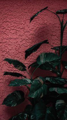 Click the link below for Tech News n Gadget Updates. Floral Wallpaper Iphone, Mood Wallpaper, Summer Wallpaper, Iphone Background Wallpaper, Pastel Wallpaper, Aesthetic Iphone Wallpaper, Cellphone Wallpaper, Nature Wallpaper, Animes Wallpapers