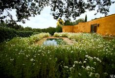 Once restrained and now riotous, Fernando Caruncho's famous green garden in Madrid—which he created in the 1980s—was reenvisioned with thousands of white cosmos. #landscapearchitecturecourtyard