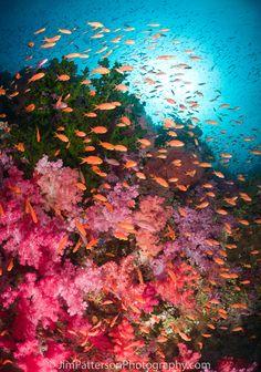 Coloful Coral | Fiji by Jim Patterson