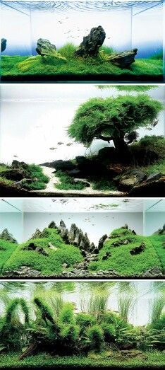 Takashi Amano is a well-known aquarium artist who is able to make otherworldly scenes underwater. With even more precision and care than the most obsessive landscape artist, Takashi sculpts his aquariums into living pieces of art that look like microcosms of a much larger space.