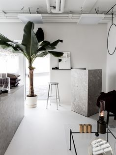 White room with grey marble accents and palm tree