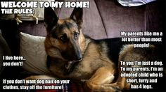 GSD lives here you don't