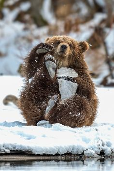 Silliness with snowy paw pads: Brown Bear Cub (by Sergey Ivanov on 500px)
