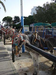 donkeys of Mijas