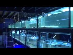 Chlorine bomb in Majestic Aquariums - routine prevention
