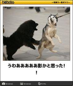 「お隣はカレーか」絶妙なコメント加えすぎ!心から笑える動物ボケて11選 | COROBUZZ