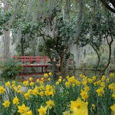 Magnolia Plantation & Its Gardens | Packages, Coupons & More for Magnolia Plantation & Its Gardens in Charleston, 29414 | Charleston Area CVB