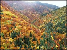 Bosque caducifolio.También conocido como bosque deciduo, cubre extensas áreas de Europa y China, América Central, Norteamérica y parte de Sudamérica.