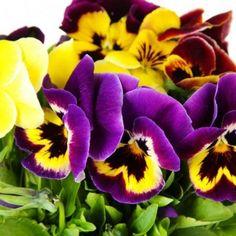 10 πανέμορφα φυτά για ζαρντινιέρες που ομορφαίνουν το μπαλκόνι! Outdoor Pots, Plants, Gardens, Home Decor, Art, Art Background, Decoration Home, Room Decor, Outdoor Gardens