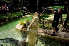 Croc vs. lawnmower