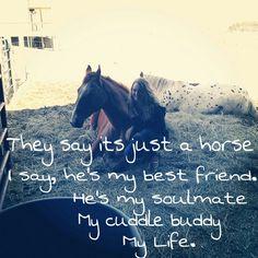 #Horses #Equestrian #EquestrianQuotes