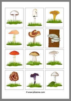 Science For Kids, Science And Nature, Diy For Kids, Crafts For Kids, Mushroom Art, Autumn Nature, Autumn Crafts, Nature Center, School Themes