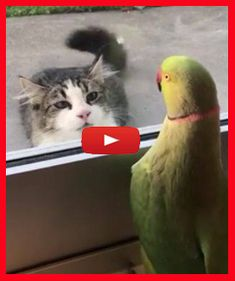 Oscar playing peekaboo with the cat from across the street Funny Cat Memes, Funny Cat Videos, Funny Cats, Funny Animals, Cute Animals, Kitten Videos, Funny Humour, Hilarious, Cute Kittens