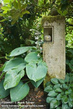 1204481 'Sum and Substance' Hosta at base of decorative hypertufa pillar [Hosta 'Sum and Substance']. Kathy Hirdler, Mount Verno