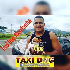 TAXI DOG MONTANHA TRANSPORTE DE ANIMAIS NO RIO DE JANEIRO: CLOE (Chihuahua) De Pederneiras-SP para Barra da T...
