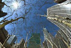 Un ampio angolo di vista degli #alberi e degli edifici intorno #BryantPark
