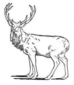 Red Deer Antlers  Curious Clipart  Vintage Clip Art  Hunting