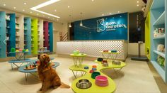 illustrativo • Estúdio Triciclo - Pet Shop project Facebook ...