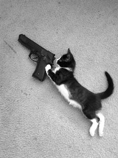 Why do you have to fill out more paperwork to adopt a kitten than when I bought my Smith  Hell, to buy a gun all I had to do was provide ID and fill out a form. Ridiculous...
