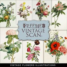 Freebies Vintage Flowers Illustrations