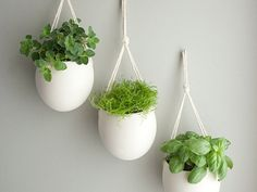 A beautiful way to add green, and herbs to your kitchen without taking up the space!
