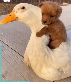 Baby Animals Pictures, Cute Animal Videos, Cute Animal Pictures, Dog Pictures, Cute Baby Dogs, Cute Dogs And Puppies, Cute Little Animals, Cute Funny Animals, Fluffy Animals
