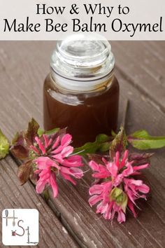 How and Why to Make Bee Balm Oxymel